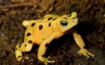 amphibians-lg