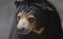 sun-and-sloth-bears-lg