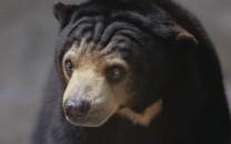 sun-and-sloth-bears-lg