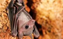 bat-main
