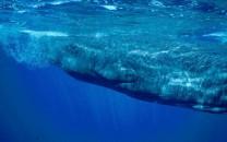 c-ewcl-whale