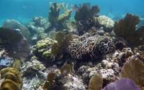 Class 6 - Corals