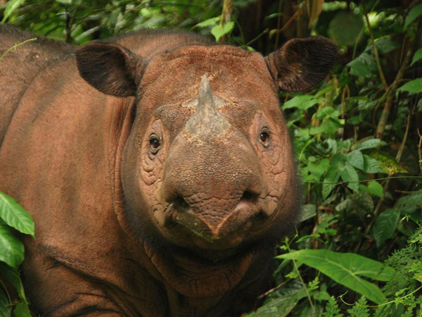 Credit: International Rhino Foundation on photo
